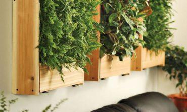 Cómo armar tu propio jardín vertical
