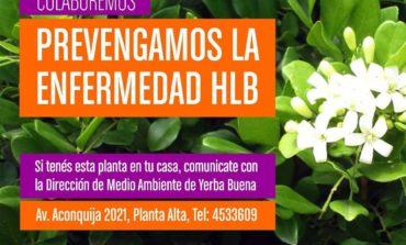Citricultura: La prevención del HLB se intensifica en Yerba Buena