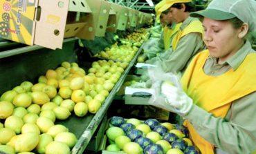 Vía libre para la exportación de limones tucumanos a Estados Unidos