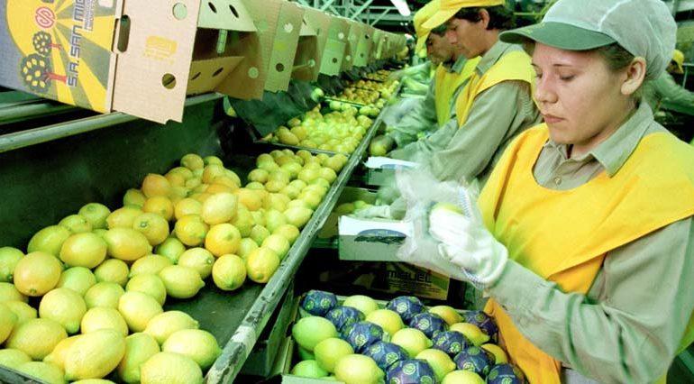 """En el mundo: Tucumán es """"la máxima exportadora de limones con uno de los sectores empresarios más responsables"""""""