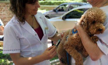 Yerba Buena | Castración y vacunación gratuitas para tus mascotas
