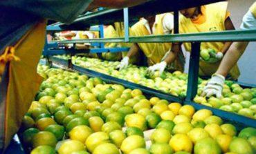 Suspenden por 15 días la exportación de limón a Europa