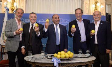 Paso a paso: Cómo volvió el limón tucumano al mercado de EEUU