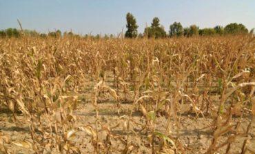 Advierten que por la sequía podrían dispararse los precios de alimentos