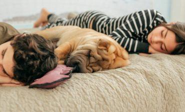 ¿Por qué dormir una larga siesta puede ser riesgoso para la salud?