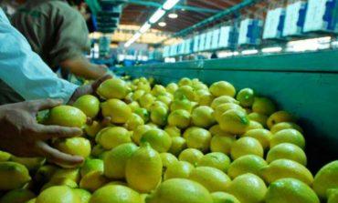 El limón tucumano vuelve a Japón