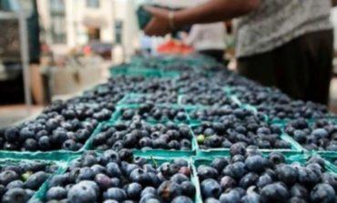 Tucumán alcanzó un nuevo récord de exportación con los arándanos