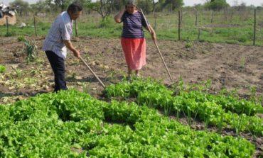 Golpe a pequeños productores: Nación eliminó el Monotributo Social Agropecuario