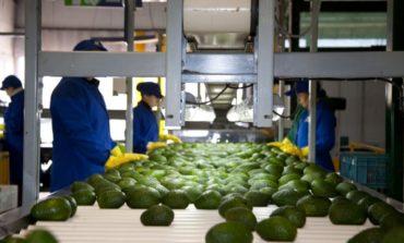 Tucumán lidera la producción agrícola y agroindustrial del norte argentino