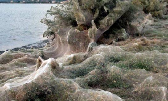 Enorme telaraña causó pánico en Grecia