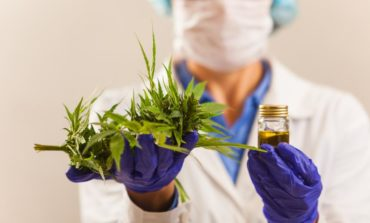 Cannabis medicinal: cada vez más valorado frente a enfermedades