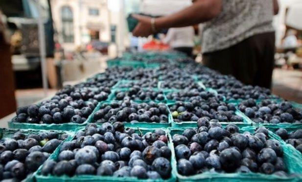 El mercado de China abre sus puertas a los arándanos tucumanos