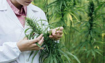 El Garrahan realiza los primeros ensayos médicos con aceite de cannabis