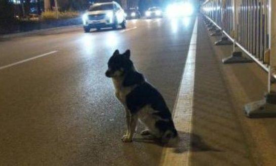 Perro espera a su dueña en la calle donde murió atropellada
