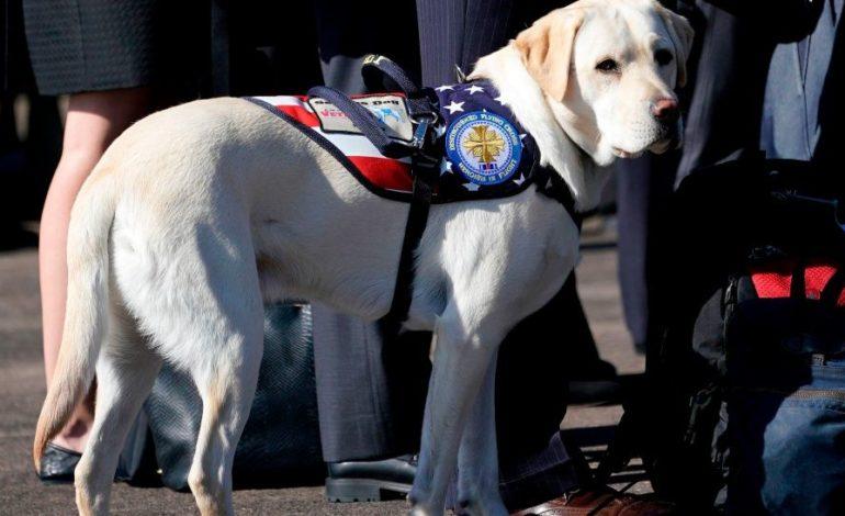 """""""Misión cumplida"""": la foto del perro de Bush que recorre el mundo"""