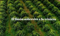 Estrenarán un documental sobre la industria citrícola tucumana