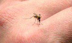 Jujuy: Ascienden a 46 los casos confirmados de dengue