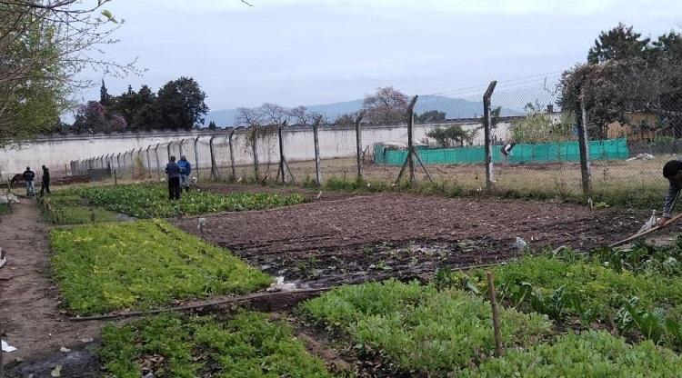 En Villa Urquiza los internos producen más de una tonelada de papas