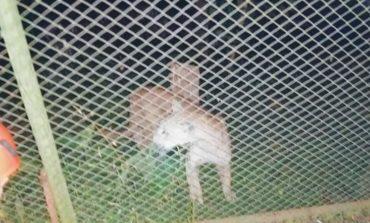 Tafí Viejo: Un puma se metió en una casa de familia