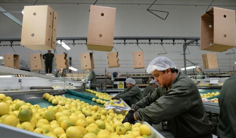Limón tucumano: Aprueban su ingreso el mercado de China