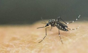 Dengue: La cifra de infectados sigue en aumento