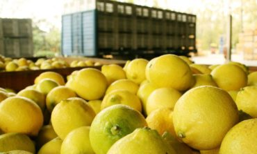 Una citrícola tucumana aspira a triplicar su exportación en plena pandemia