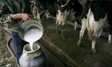 Desde hoy, en Trancas, se produce leche para todos los tucumanos