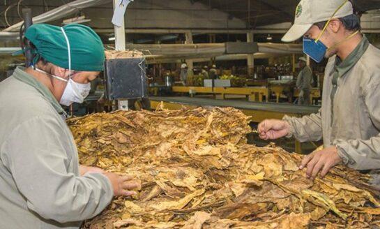 Impulso: COPAT inyecta $40 millones al sector tabacalero tucumano