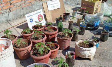 El Colmenar: Secuestran 33 plantas de marihuana, semillas y químicos