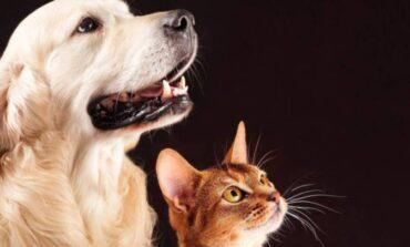 Salud: perros y gatos pueden contagiarse coronavirus de sus dueños