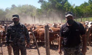 Por una estafa a ganaderos secuestraron más de 120 vacas
